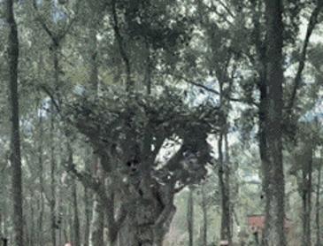 나무 코스프레 레전드