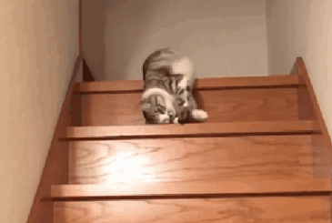 계단 내려오는 냥이