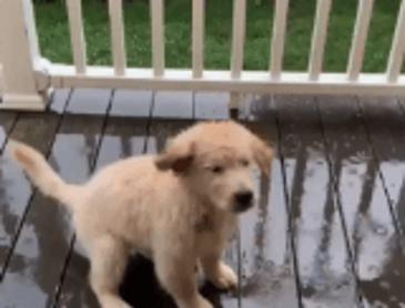 비가와서 기분이 좋은 강아지