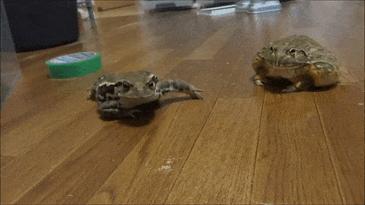 두꺼비 식사시간