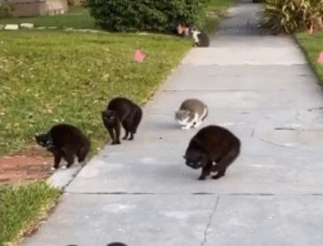 길막하는 고양이