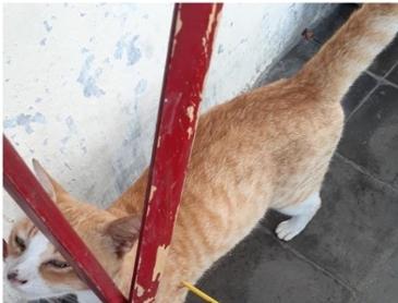 화살 맞은 불쌍한 고양이