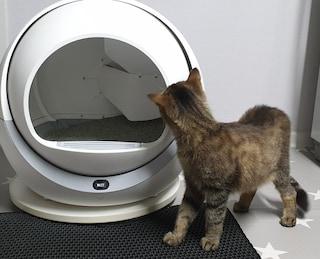 1일n감자 수확이 끝났다. 디클 펫트리 고양이 자동화장실 리뷰