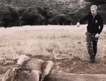 뒤에서 사자 놀래키기