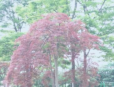 이게 무슨 나무일까요?