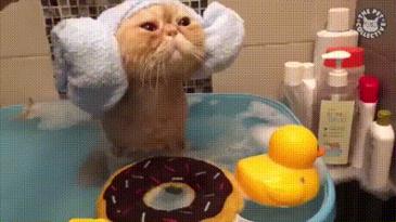 목욕 너무 좋다옹