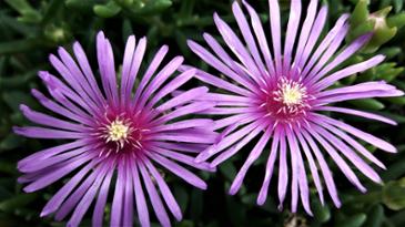 꽃이 이쁘네요.