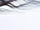 윤기나는 모발을 원한다면 '헤어드라이어'  [차트뉴스]