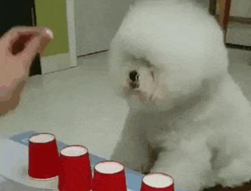 똑똑한 강아지