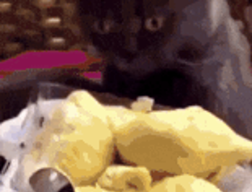 두리안 냄새를 맡은 고양이들