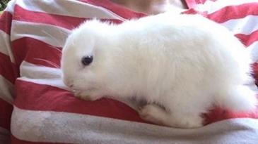 귀 없이 태어난 토끼