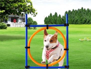 강아지의 점프