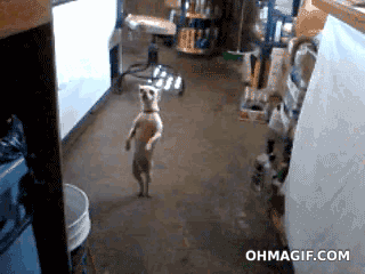 강아지의 재롱