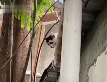 항상 슬픈 고양이