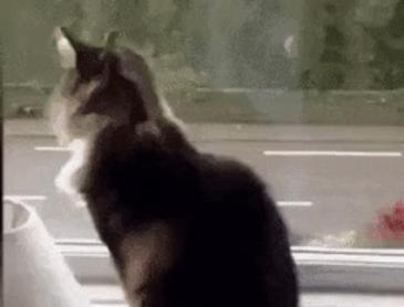 집사가 출근할 때 고양이의 반응