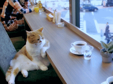 커피 한잔의 여유