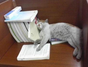 공부를 못하는 이유