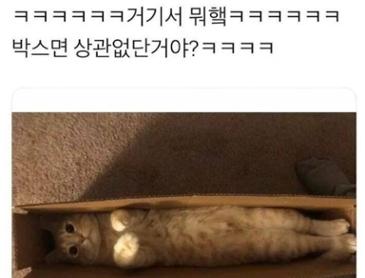 실종 고양이 발견