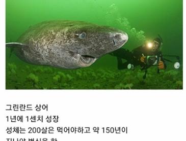 오래사는 상어