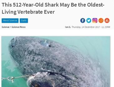 512살 상어