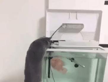 고양이 vs 물고기