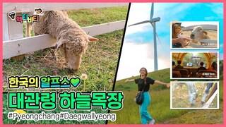 ★평창여행★평창 가볼만한 곳 [대관령 하늘목장] Travel Korea / Gangwon do trip :  Daegwallyeong Sky Ranch