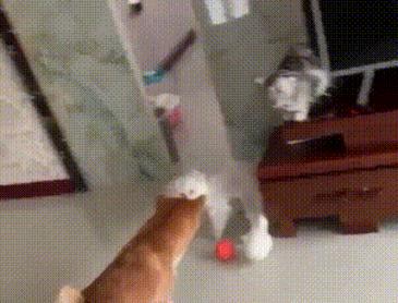 공좀 가져갈개