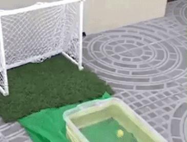 브라질에서 온듯한 애완물고기