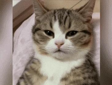 고양이 뱃살 조물조물