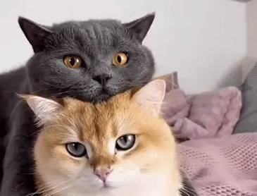 고양이 모자