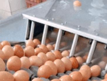 계란빵 공장