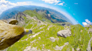 검독수리의 시야로 보는 풍경