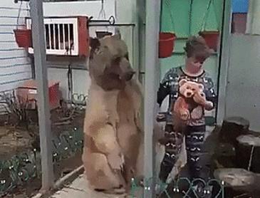 댕댕이 같은 곰