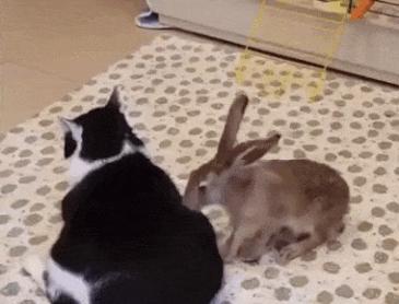 토끼 마사지사
