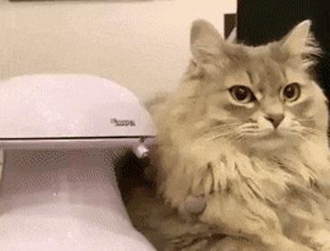 바보 같은 고양이