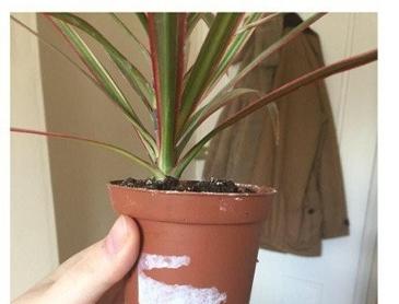 진화중인 식물