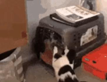 강아지를 구해주는 고양이