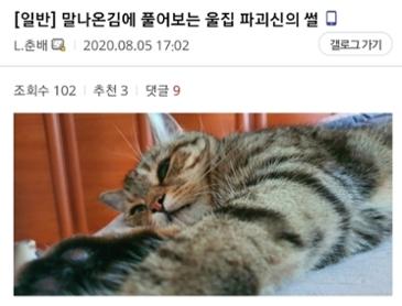 착지하는 법을 배우지 못한 고양이...