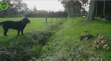 점프키를 너무 일찍 누른 강아지 ㅠ