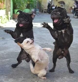댄스 타임!