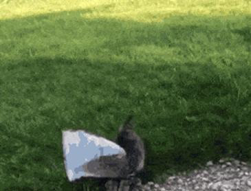 봉지에 얼굴이 낀 고양이