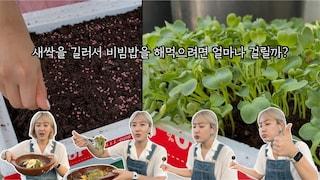 고나고 홈 | 직접 씨앗을 심고 키워서 먹는 열무새싹 비빔밥
