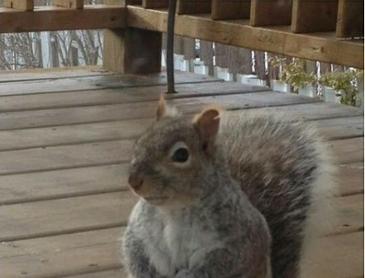공손한 다람쥐