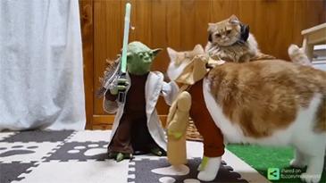 고양이 능욕 장난감