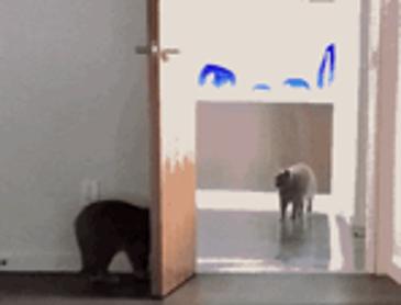 친구 놀리는데 재미 붙인 고양이