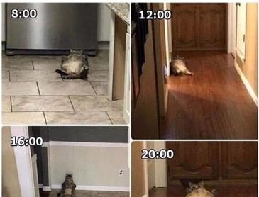 고양이의 하루를 cctv로 지켜보고 내린 상