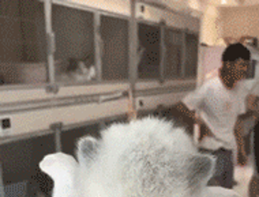 실시간 성장하는 고양이.gif