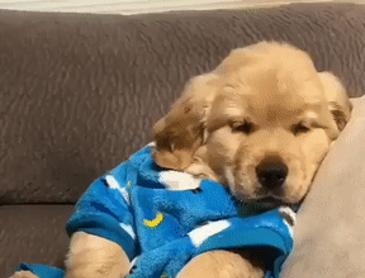 잠옷입고 하품하는 아기인절미