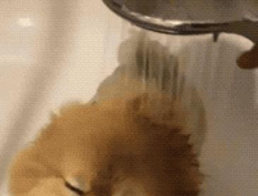뽀송뽀송 포뭉이 목욕