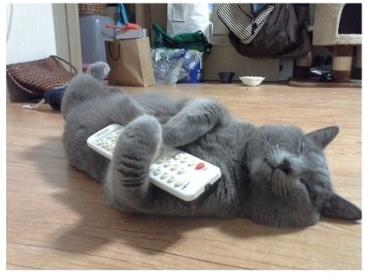 잠든 고양이에게 장난치기